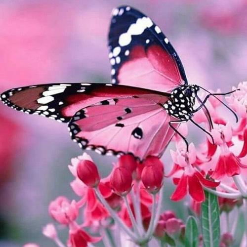Self-Regeneration & Self-Rejuvenation