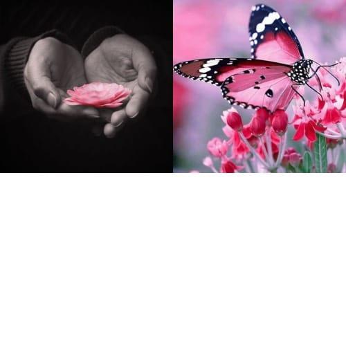 Set - Self-Compassion & Self-Regeneration